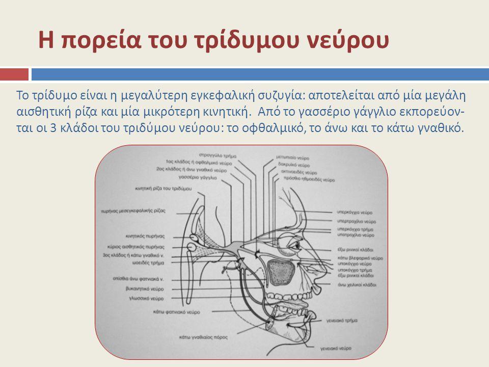 Η πορεία του τρίδυμου νεύρου Το τρίδυμο είναι η μεγαλύτερη εγκεφαλική συζυγία: αποτελείται από μία μεγάλη αισθητική ρίζα και μία μικρότερη κινητική. Α