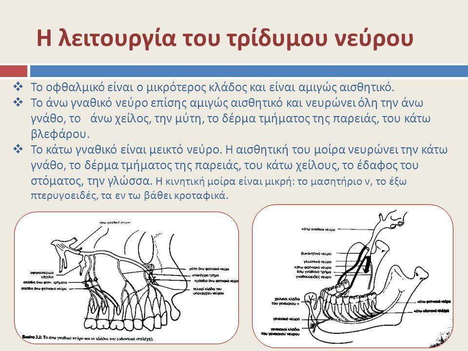 Η λειτουργία του τρίδυμου νεύρου  Το οφθαλμικό είναι ο μικρότερος κλάδος και είναι αμιγώς αισθητικό.  Το άνω γναθικό νεύρο επίσης αμιγώς αισθητικό κ