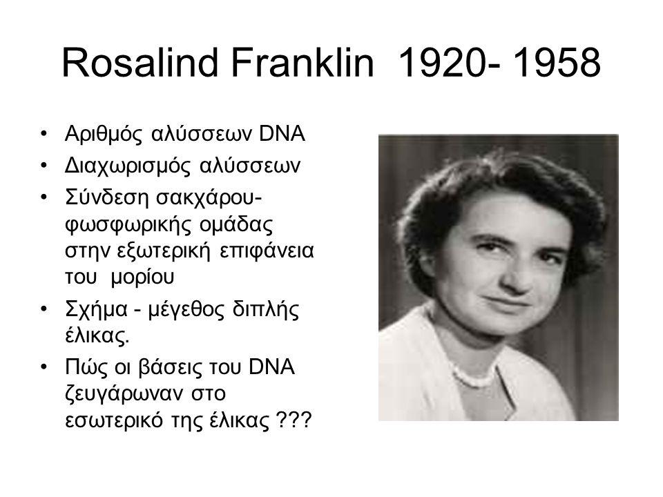 Rosalind Franklin 1920- 1958 Αριθμός αλύσσεων DNA Διαχωρισμός αλύσσεων Σύνδεση σακχάρου- φωσφωρικής ομάδας στην εξωτερική επιφάνεια του μορίου Σχήμα -