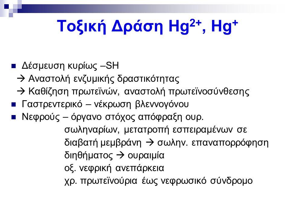 Τοξική Δράση Hg 2+, Hg + Δέσμευση κυρίως –SH  Αναστολή ενζυμικής δραστικότητας  Καθίζηση πρωτεϊνών, αναστολή πρωτεϊνοσύνθεσης Γαστρεντερικό – νέκρωσ