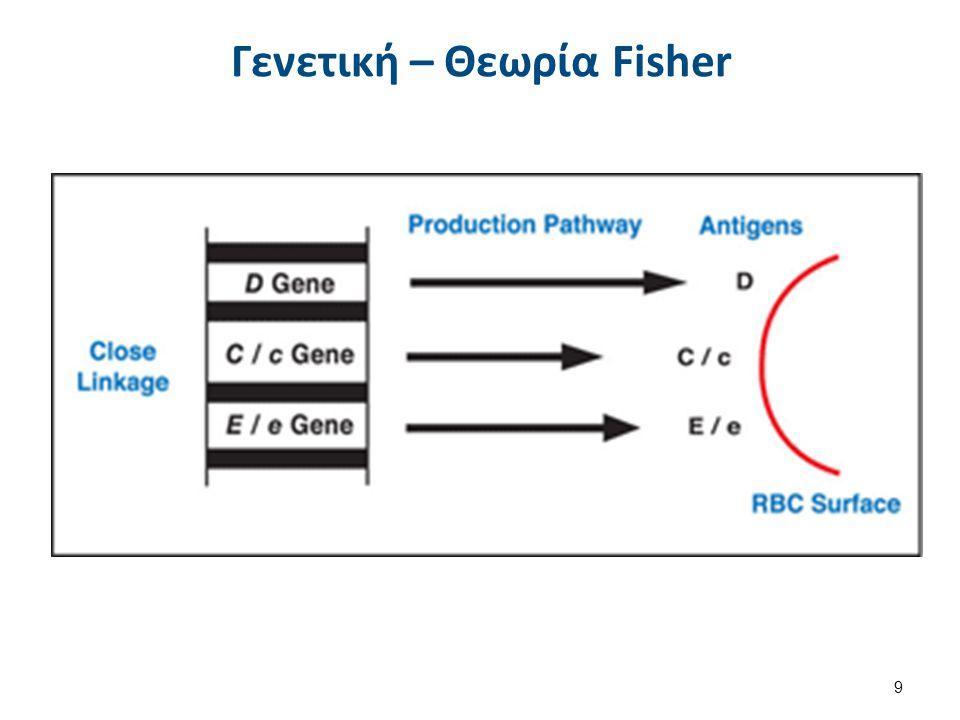 Γενετική – Θεωρία Fisher Υπάρχουν 3 διαφορετικές γονιδιακές θέσεις στο ίδιο χρωμόσωμα υπεύθυνες για τη παραγωγή των Ags C, c, D, E, e. Βραχύ σκέλος το