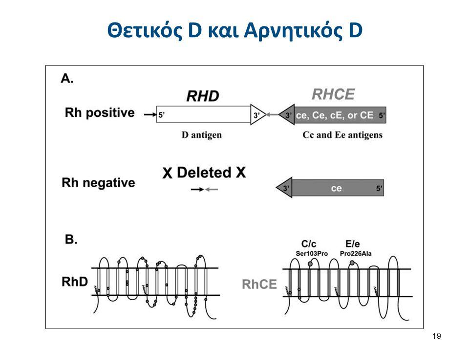 """10 RHD εξώνια 10 RHCE εξώνια Διάγραμμα των Γονιδίων RHD και RHCE 18 """"Gene structure"""", από Hoffmeier διαθέσιμο με άδεια CC BY-SA 3.0Gene structureHoffm"""