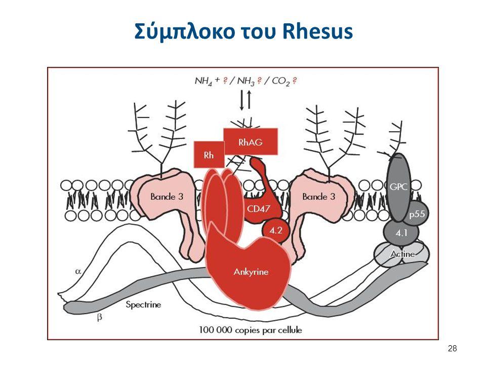 Παραλλαγές του Συστήματος Rh Φαινότυπος Rhnull Απώλεια όλων των γονιδίων του συστήματος Rh. H ερυθροκυτταρική μεμβράνη δεν έχει κανένα Ag-Rh. Διαταραχ