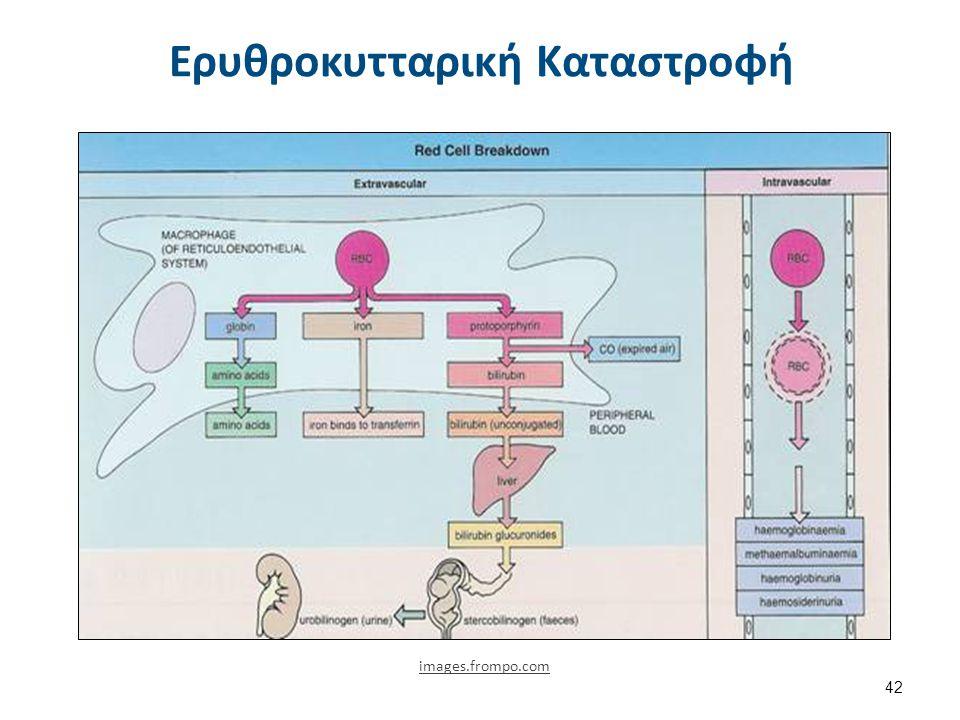 Παραγωγή Abs-Rh (1) Ασύμβατη Μετάγγιση Όταν Rh(-) μεταγγιστεί με Rh(+) αίμα. Η ευαισθητοποίηση είναι άμεση και η παραγωγή Abs σε 6-8 εβδομάδες. Νέα ασ