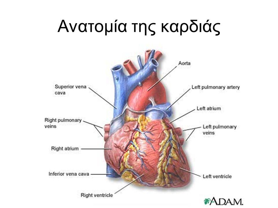 Ανατομία της καρδιάς