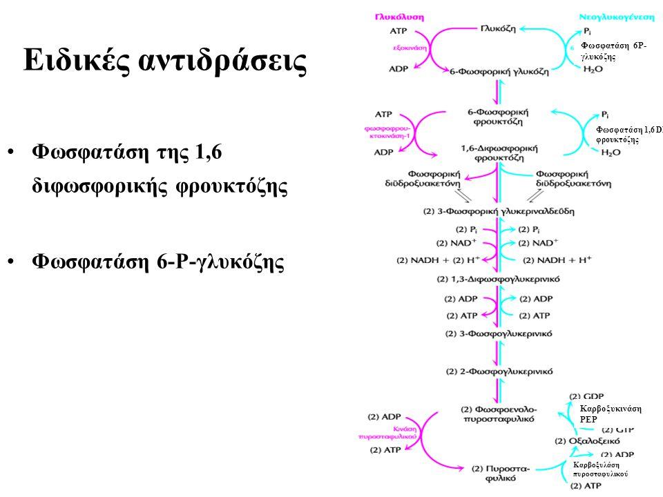 Eιδικές αντιδράσεις Φωσφατάση της 1,6 διφωσφορικής φρουκτόζης Φωσφατάση 6-Ρ-γλυκόζης Φωσφατάση 6Ρ- γλυκόζης Φωσφατάση 1,6 DP φρουκτόζης Καρβοξυκινάση