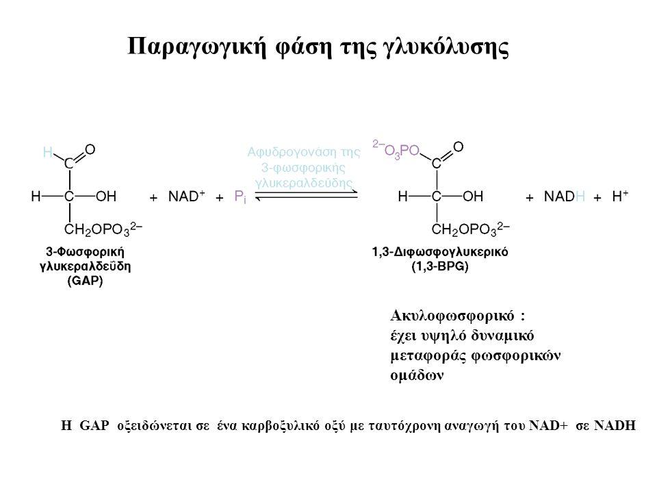 Ακυλοφωσφορικό : έχει υψηλό δυναμικό μεταφοράς φωσφορικών ομάδων Παραγωγική φάση της γλυκόλυσης Η GAP οξειδώνεται σε ένα καρβοξυλικό οξύ με ταυτόχρονη