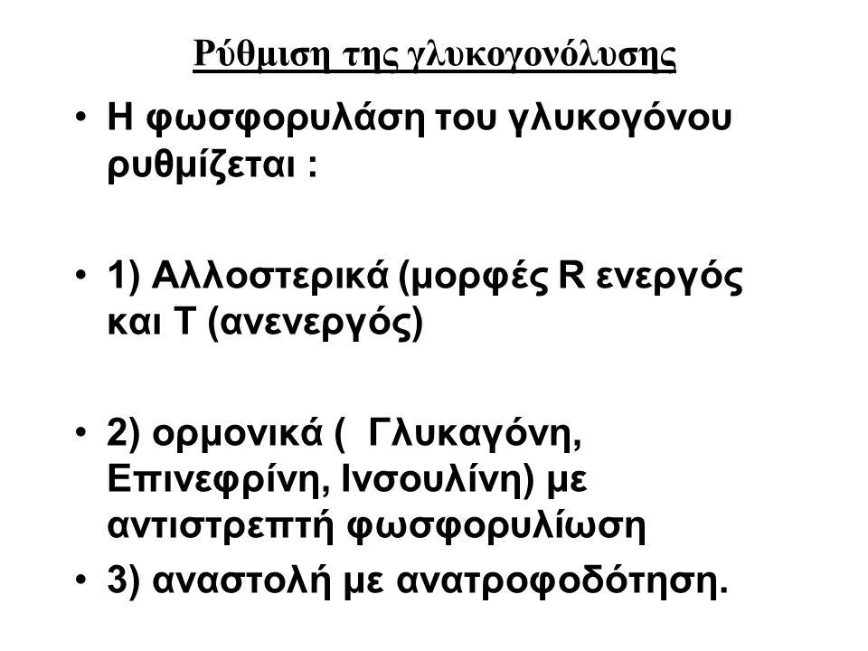 Ρύθμιση της γλυκογονόλυσης Η φωσφορυλάση του γλυκογόνου ρυθμίζεται : 1) Αλλοστερικά (μορφές R ενεργός και T (ανενεργός) 2) ορμονικά ( Γλυκαγόνη, Επινε