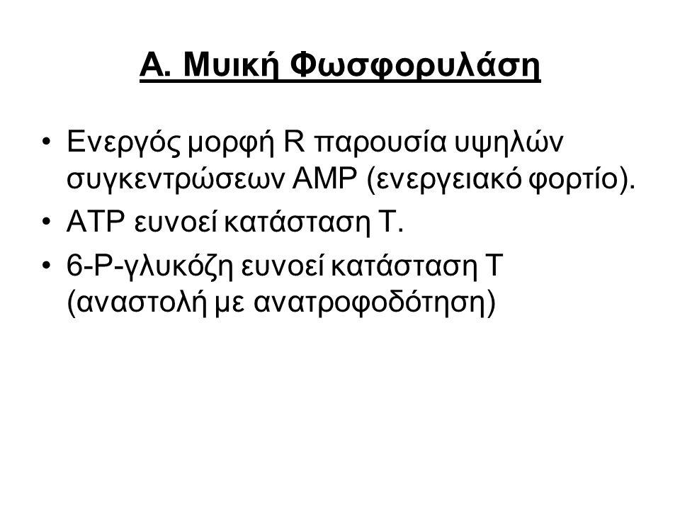 Α. Μυική Φωσφορυλάση Ενεργός μορφή R παρουσία υψηλών συγκεντρώσεων ΑΜΡ (ενεργειακό φορτίο). ΑΤP ευνοεί κατάσταση Τ. 6-Ρ-γλυκόζη ευνοεί κατάσταση Τ (αν
