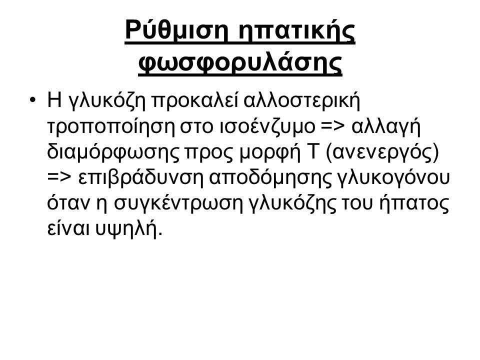 Ρύθμιση ηπατικής φωσφορυλάσης Η γλυκόζη προκαλεί αλλοστερική τροποποίηση στο ισοένζυμο => αλλαγή διαμόρφωσης προς μορφή Τ (ανενεργός) => επιβράδυνση α