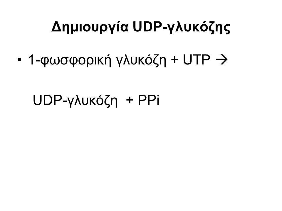 Δημιουργία UDP-γλυκόζης 1-φωσφορική γλυκόζη + UTP  UDP-γλυκόζη + PPi