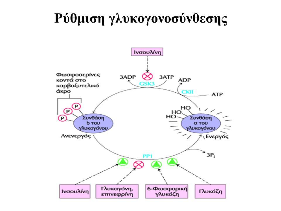 Ρύθμιση γλυκογονοσύνθεσης