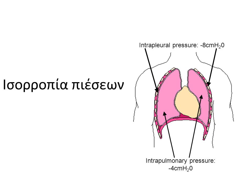 Ισορροπία πιέσεων Intrapulmonary pressure: -4cmH 2 0 Intrapleural pressure: -8cmH 2 0 Intrapulmonary pressure: -4cmH 2 0 Intrapleural pressure: -8cmH