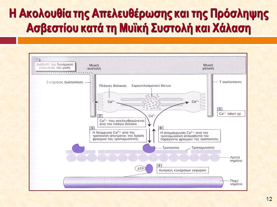 Η Ακολουθία της Απελευθέρωσης και της Πρόσληψης Ασβεστίου κατά τη Μυϊκή Συστολή και Χάλαση (Watson, 2011) 12