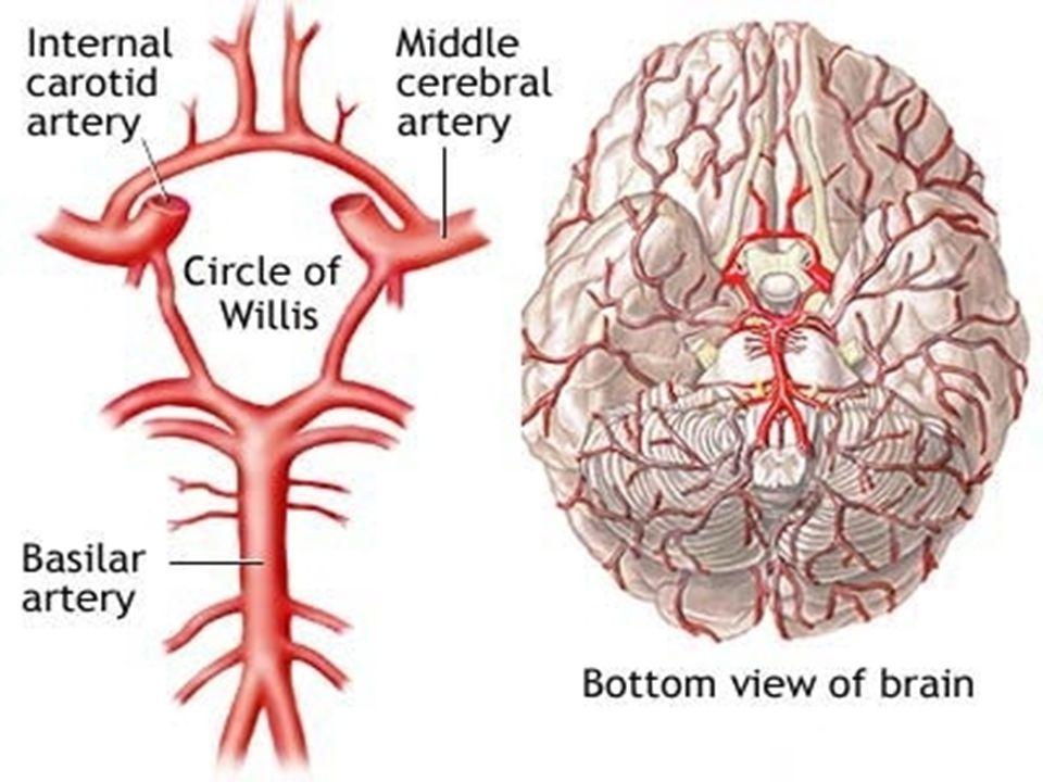 Έσω καρωτιδική αρτηρία Αιματώνει: το δεξιό ή αριστερό ημισφαίριο Έλλειμμα: ετερόπλευρο κινητικό ή αισθητικό έλλειμμα, αφασία σε βλάβη του επικρατούντος ημισφαιρίου, παραμέληση του μη επικρατούντος ημισφαιρίου ετερόπλευρο έλλειμμα οπτικού πεδίου (ημιανοψία), ετερόπλευρη απόκλιση οφθαλμού