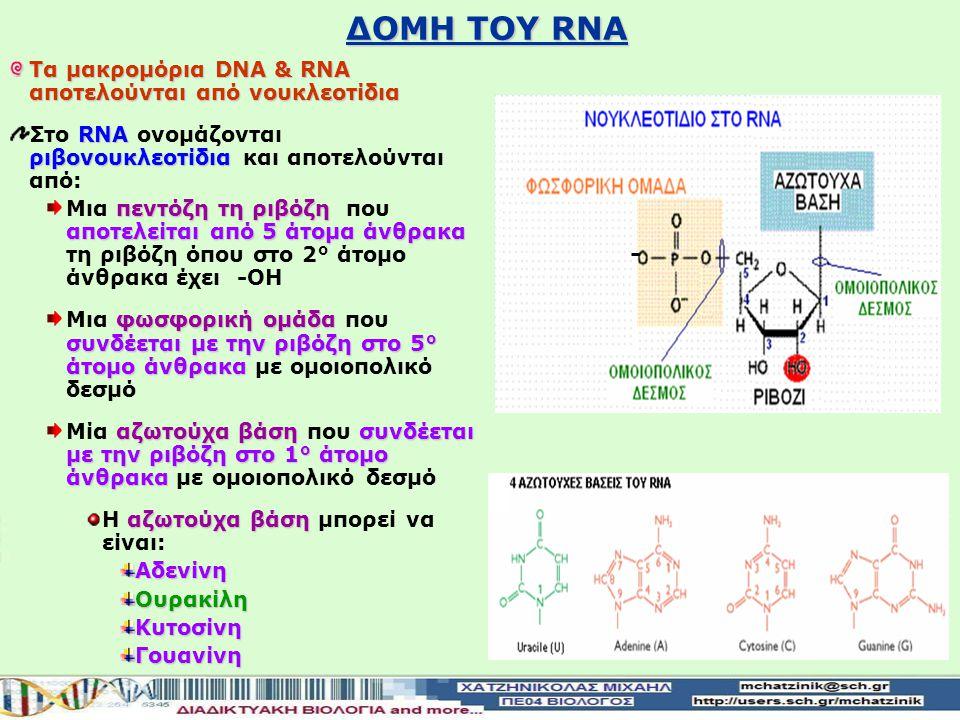 ΔΟΜΗ ΤΟΥ DNA Τα μακρομόρια DNA & RNA αποτελούνται από νουκλεοτίδια DNA Δεσοξυριβονουκλεοτίδια Στο DNA ονομάζονται Δεσοξυριβονουκλεοτίδια και αποτελούν