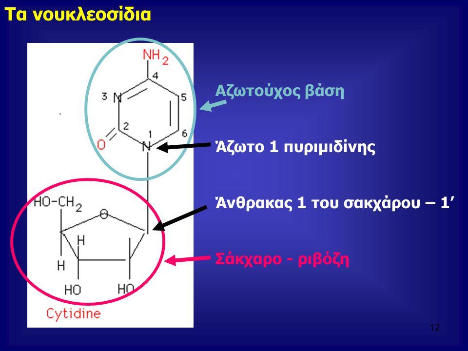 Τα νουκλεοσίδια Αζωτούχος βάση Άζωτο 1 πυριμιδίνης Άνθρακας 1 του σακχάρου – 1' Σάκχαρο - ριβόζη 12