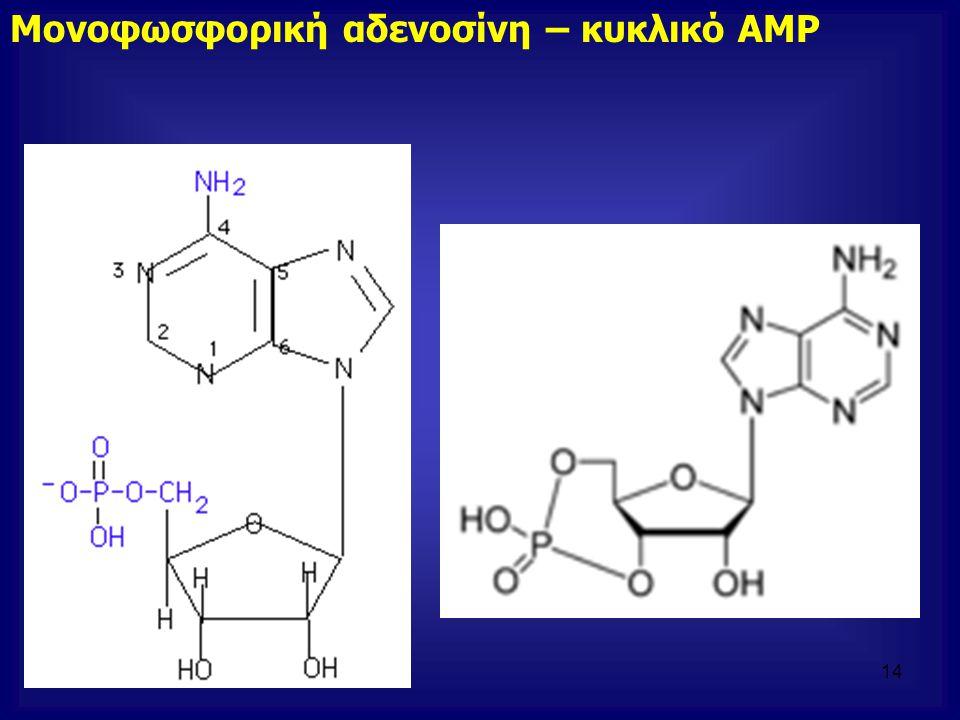 Μονοφωσφορική αδενοσίνη – κυκλικό ΑΜΡ 14