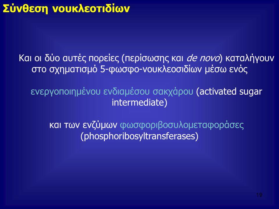 Και οι δύο αυτές πορείες (περίσωσης και de novo) καταλήγουν στο σχηματισμό 5-φωσφο-νουκλεοσιδίων μέσω ενός ενεργοποιημένου ενδιαμέσου σακχάρου (activa