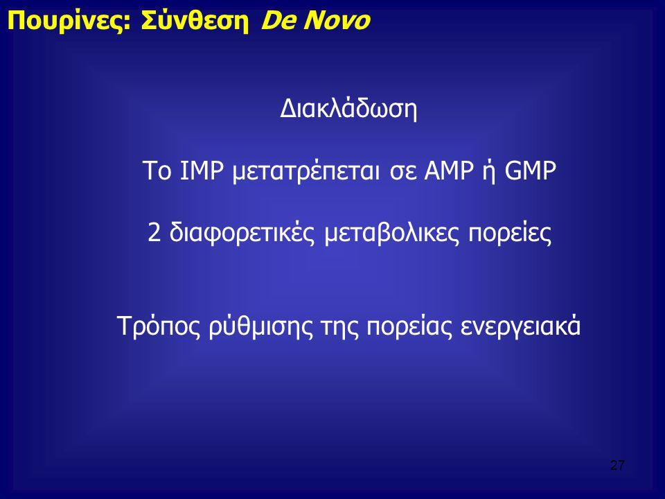 Διακλάδωση Το ΙΜΡ μετατρέπεται σε AMP ή GMP 2 διαφορετικές μεταβολικες πορείες Τρόπος ρύθμισης της πορείας ενεργειακά Πουρίνες: Σύνθεση De Novo 27