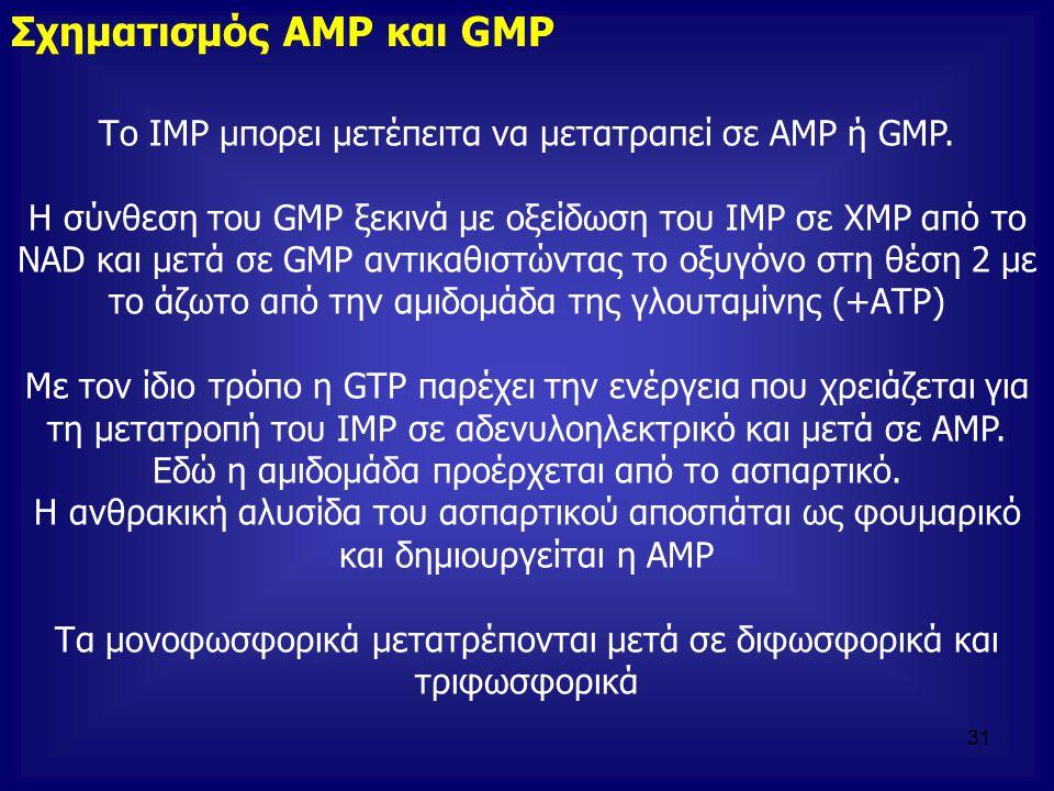 Το IMP μπορει μετέπειτα να μετατραπεί σε AMP ή GMP. Η σύνθεση του GMP ξεκινά με οξείδωση του ΙΜΡ σε ΧΜΡ από το NAD και μετά σε GMP αντικαθιστώντας το