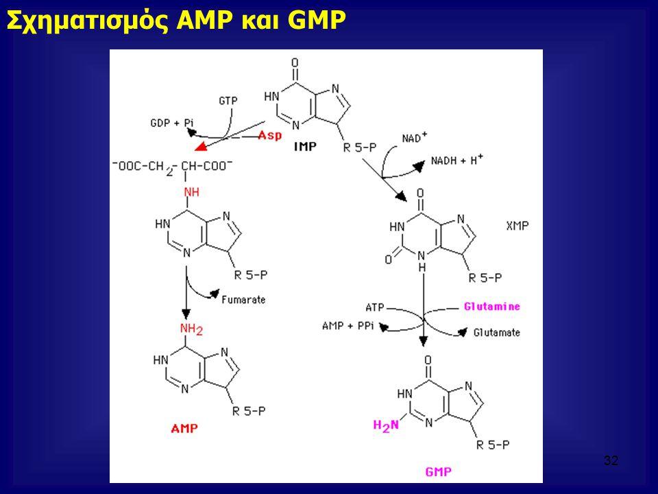 Σχηματισμός AMP και GMP 32