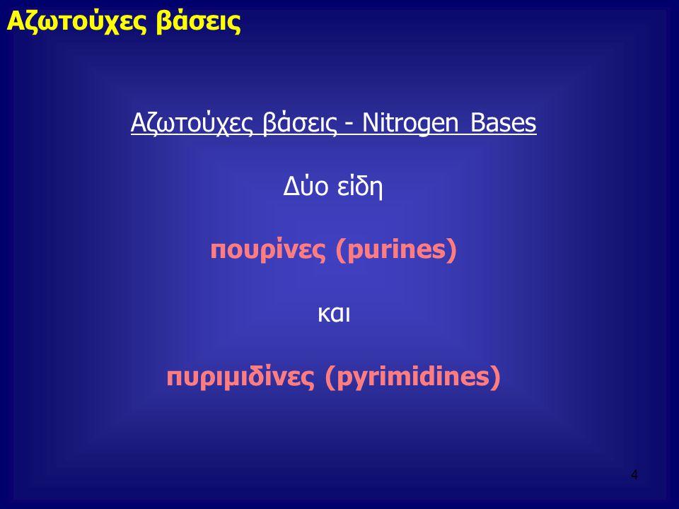 Αζωτούχες βάσεις - Nitrogen Bases Δύο είδη πουρίνες (purines) και πυριμιδίνες (pyrimidines) Αζωτούχες βάσεις 4