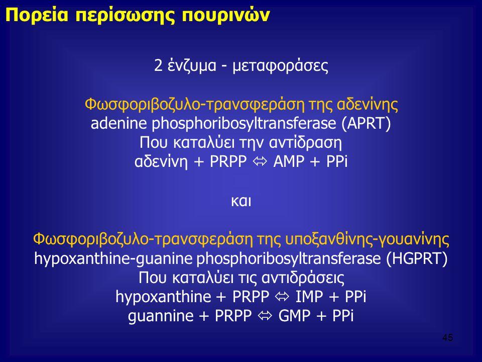 2 ένζυμα - μεταφοράσες Φωσφοριβοζυλο-τρανσφεράση της αδενίνης adenine phosphoribosyltransferase (APRT) Που καταλύει την αντίδραση αδενίνη + PRPP  AMP