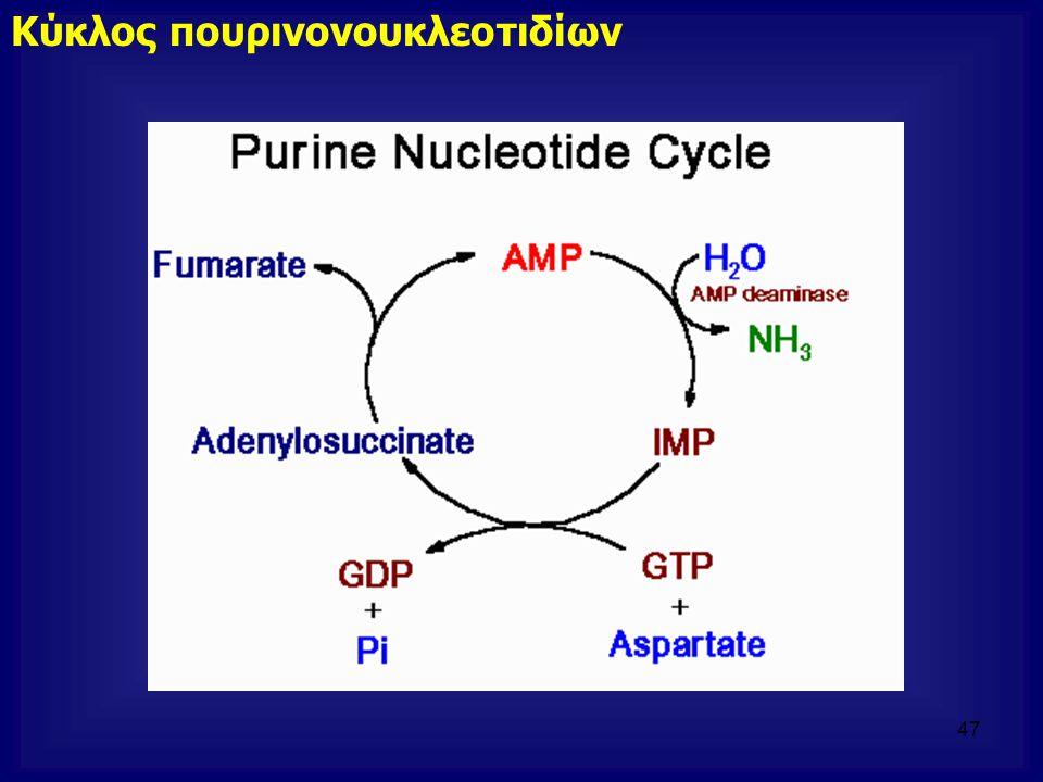 Κύκλος πουρινονουκλεοτιδίων 47