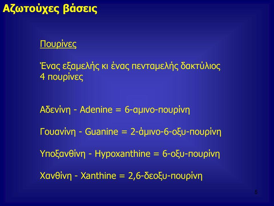 Πουρίνες Ένας εξαμελής κι ένας πενταμελής δακτύλιος 4 πουρίνες Αδενίνη - Adenine = 6-αμινο-πουρίνη Γουανίνη - Guanine = 2-άμινο-6-οξυ-πουρίνη Υποξανθί