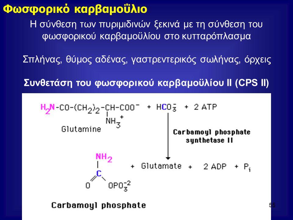 Η σύνθεση των πυριμιδινών ξεκινά με τη σύνθεση του φωσφορικού καρβαμοϋλίου στο κυτταρόπλασμα Σπλήνας, θύμος αδένας, γαστρεντερικός σωλήνας, όρχεις Συν