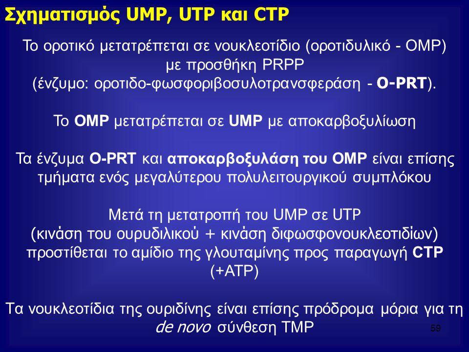 Το οροτικό μετατρέπεται σε νουκλεοτίδιο (οροτιδυλικό - ΟΜΡ) με προσθήκη PRPP (ένζυμο: οροτιδο-φωσφοριβοσυλοτρανσφεράση - O-PRT ). Το OMP μετατρέπεται