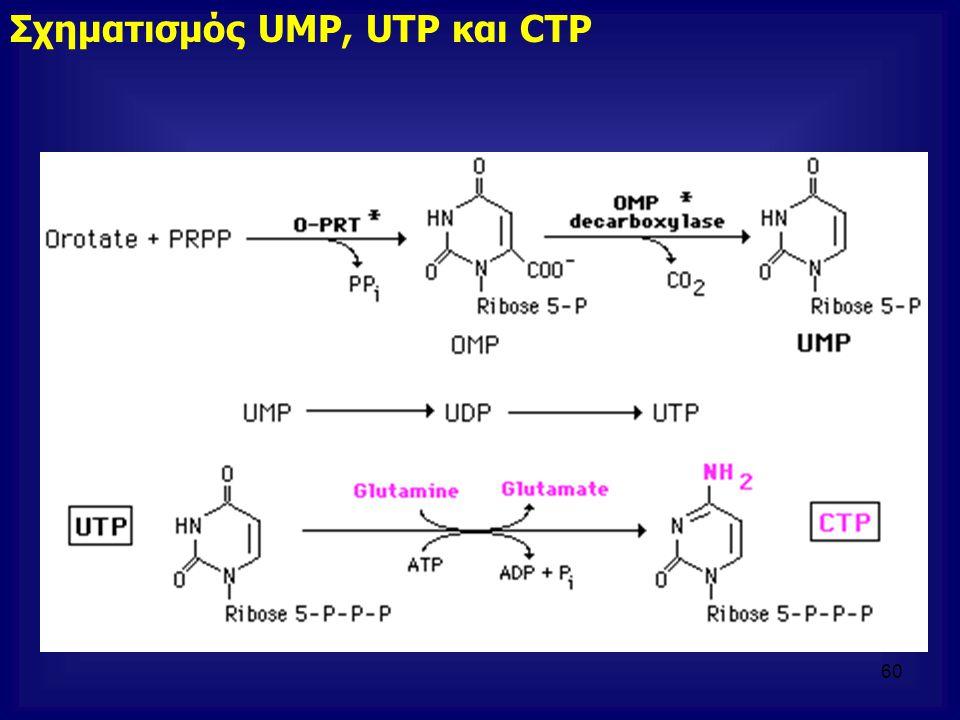 Σχηματισμός UMP, UTP και CTP 60
