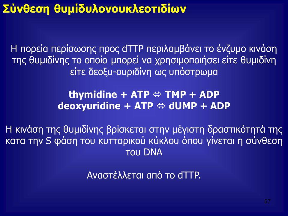 Σύνθεση θυμίδυλονουκλεοτιδίων Η πορεία περίσωσης προς dTTP περιλαμβάνει το ένζυμο κινάση της θυμιδίνης το οποίο μπορεί να χρησιμοποιήσει είτε θυμιδίνη
