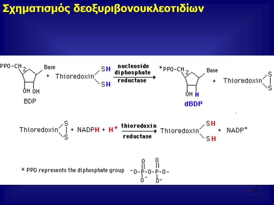 Σχηματισμός δεοξυριβονουκλεοτιδίων 78