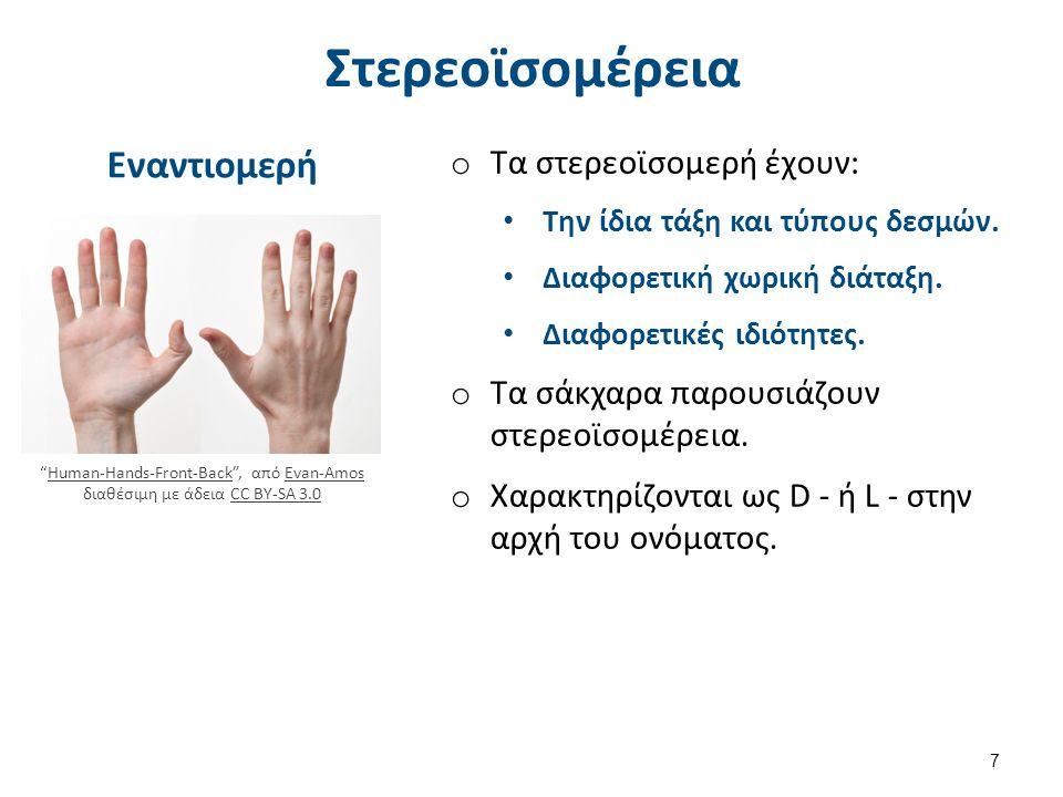 """Στερεοϊσομέρεια Εναντιομερή """"Human-Hands-Front-Back"""", από Evan-Amos διαθέσιμη με άδεια CC BY-SA 3.0Human-Hands-Front-BackEvan-AmosCC BY-SA 3.0 o Τα στ"""