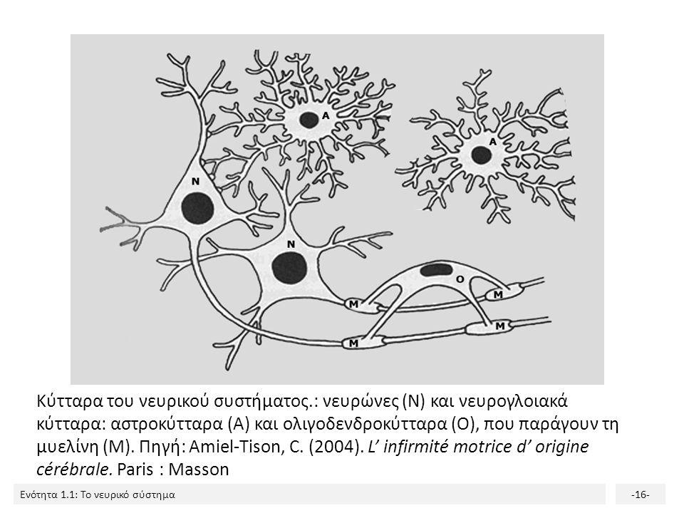 Ενότητα 1.1: Το νευρικό σύστημα-15- Κύτταρα του Νευρικού συστήματος Δύο κατηγορίες: 1.Νευρώνες 2.Γλοιακά κύτταρα