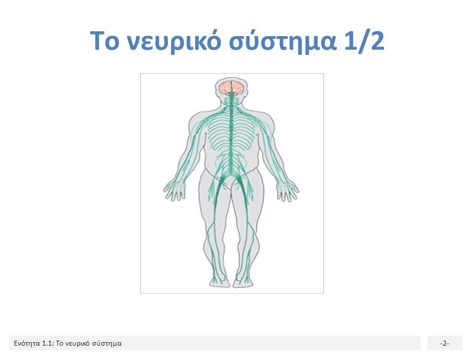 Ενότητα 1.1: Το νευρικό σύστημα-12- Κάθε νεύρο διαθέτει κινητικές και αισθητικές νευρικές ίνες.