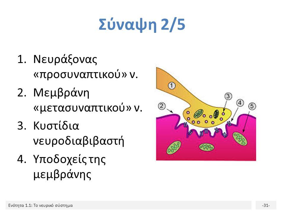 Ενότητα 1.1: Το νευρικό σύστημα-30- Σύναψη 1/5 Το σημείο όπου γίνεται η μεταβίβαση του μηνύματος από τον νευράξονα του «προσυναπτικού» νευρώνα στον δε