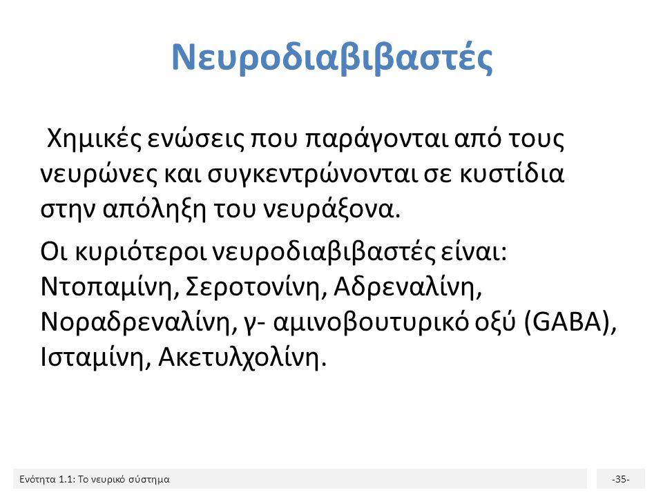 Ενότητα 1.1: Το νευρικό σύστημα-34- Συνάψεις 5/5