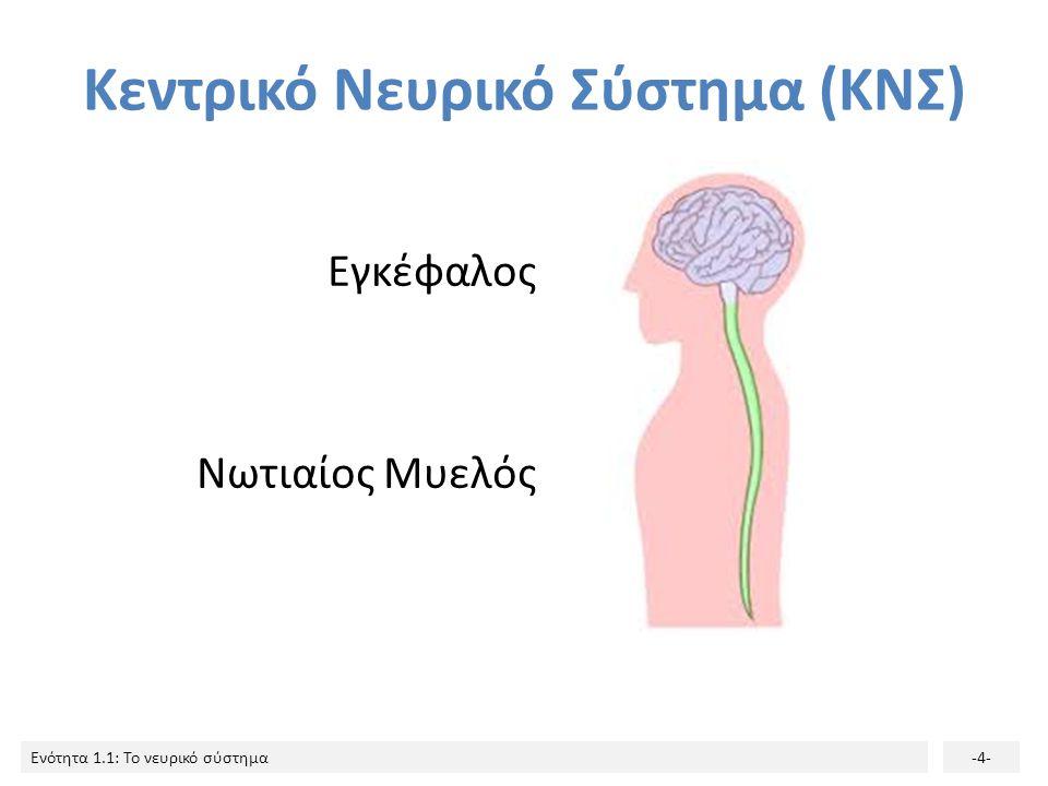 Ενότητα 1.1: Το νευρικό σύστημα-24- Νευράξονας 2/2 Το μήκος του νευράξονα μπορεί να ξεπερνά το ένα μέτρο και η ταχύτητα αγωγής του ερεθίσματος φτάνει τα 100 m/sec!