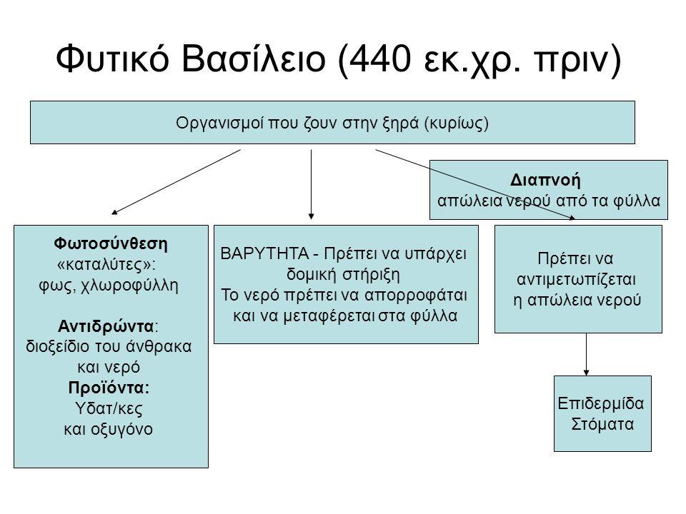 Φυτικό Βασίλειο (440 εκ.χρ. πριν) Οργανισμοί που ζουν στην ξηρά (κυρίως) Φωτοσύνθεση «καταλύτες»: φως, χλωροφύλλη Αντιδρώντα: διοξείδιο του άνθρακα κα