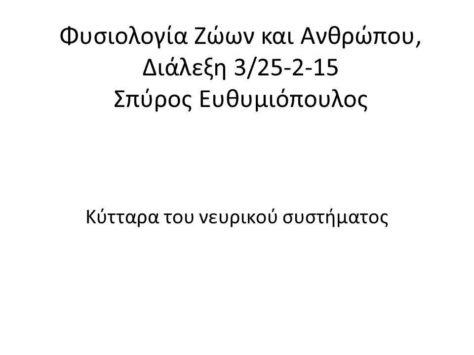 Φυσιολογία Ζώων και Ανθρώπου, Διάλεξη 3/25-2-15 Σπύρος Ευθυμιόπουλος Κύτταρα του νευρικού συστήματος