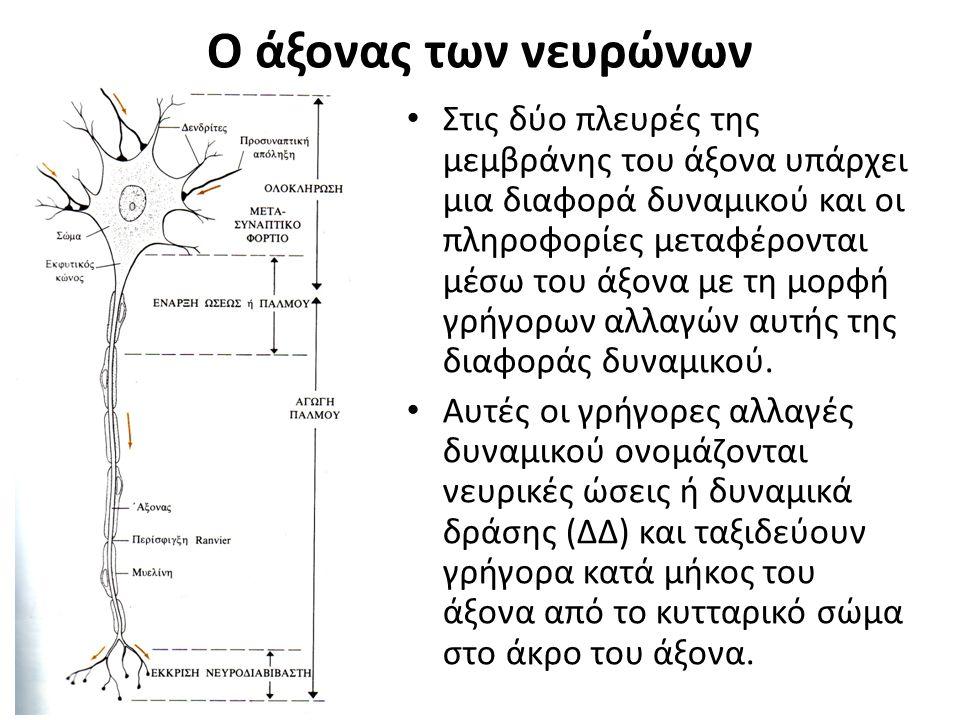 Ο άξονας των νευρώνων 6-2 Στις δύο πλευρές της μεμβράνης του άξονα υπάρχει μια διαφορά δυναμικού και οι πληροφορίες μεταφέρονται μέσω του άξονα με τη