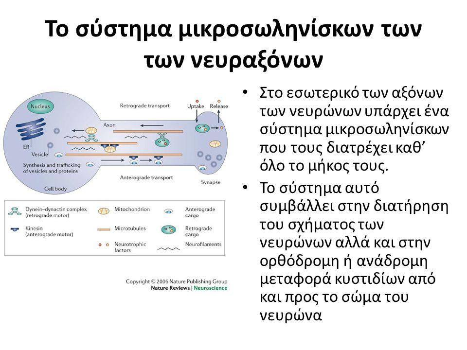 Το σύστημα μικροσωληνίσκων των των νευραξόνων Στο εσωτερικό των αξόνων των νευρώνων υπάρχει ένα σύστημα μικροσωληνίσκων που τους διατρέχει καθ' όλο το