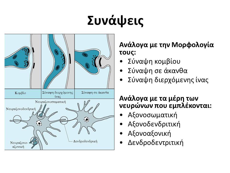 Συνάψεις Ανάλογα με την Μορφολογία τους: Σύναψη κομβίου Σύναψη σε άκανθα Σύναψη διερχόμενης ίνας Ανάλογα με τα μέρη των νευρώνων που εμπλέκονται: Αξον