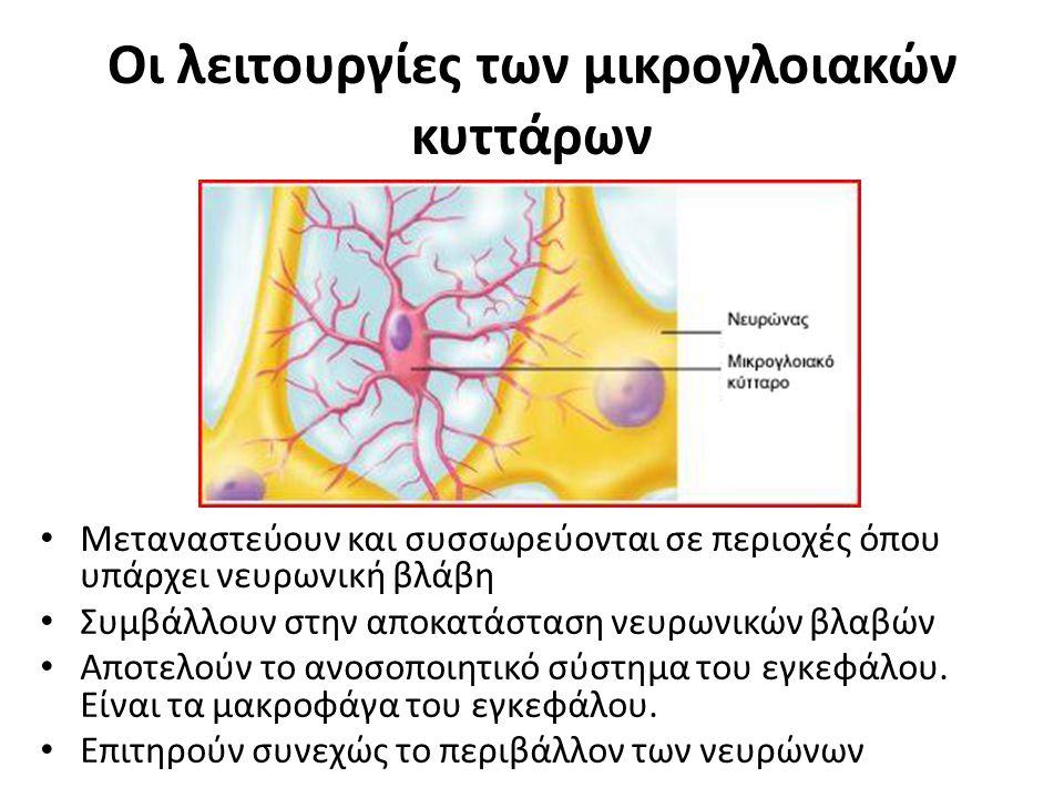 Οι λειτουργίες των μικρογλοιακών κυττάρων Μεταναστεύουν και συσσωρεύονται σε περιοχές όπου υπάρχει νευρωνική βλάβη Συμβάλλουν στην αποκατάσταση νευρων