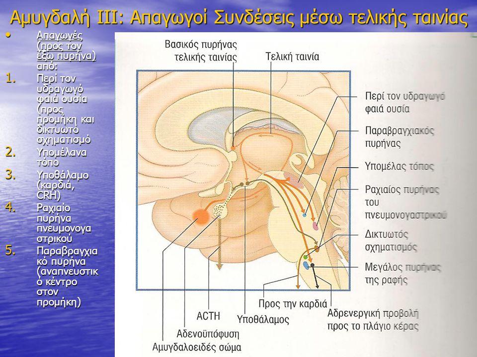 Αμυγδαλή ΙΙΙ: Απαγωγοί Συνδέσεις μέσω τελικής ταινίας Απαγωγές (προς τον έξω πυρήνα) από: Απαγωγές (προς τον έξω πυρήνα) από: 1. Περί τον υδραγωγό φαι