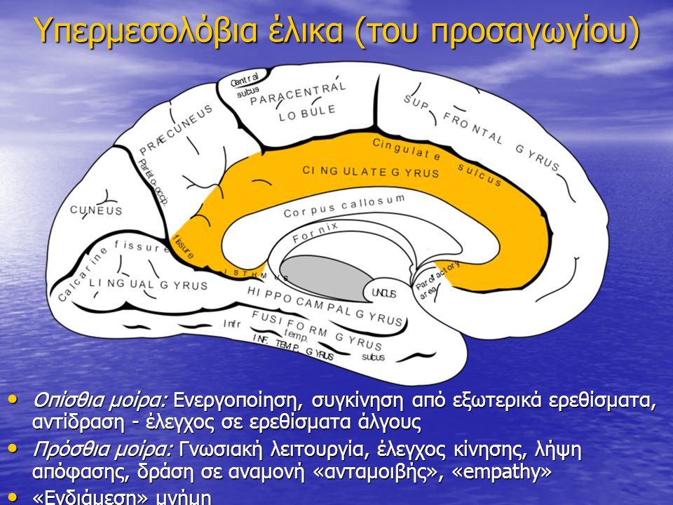 Υπερμεσολόβια έλικα (του προσαγωγίου) Οπίσθια μοίρα: Ενεργοποίηση, συγκίνηση από εξωτερικά ερεθίσματα, αντίδραση - έλεγχος σε ερεθίσματα άλγους Οπίσθι