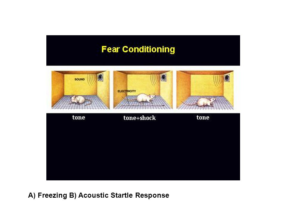 A) Freezing B) Acoustic Startle Response